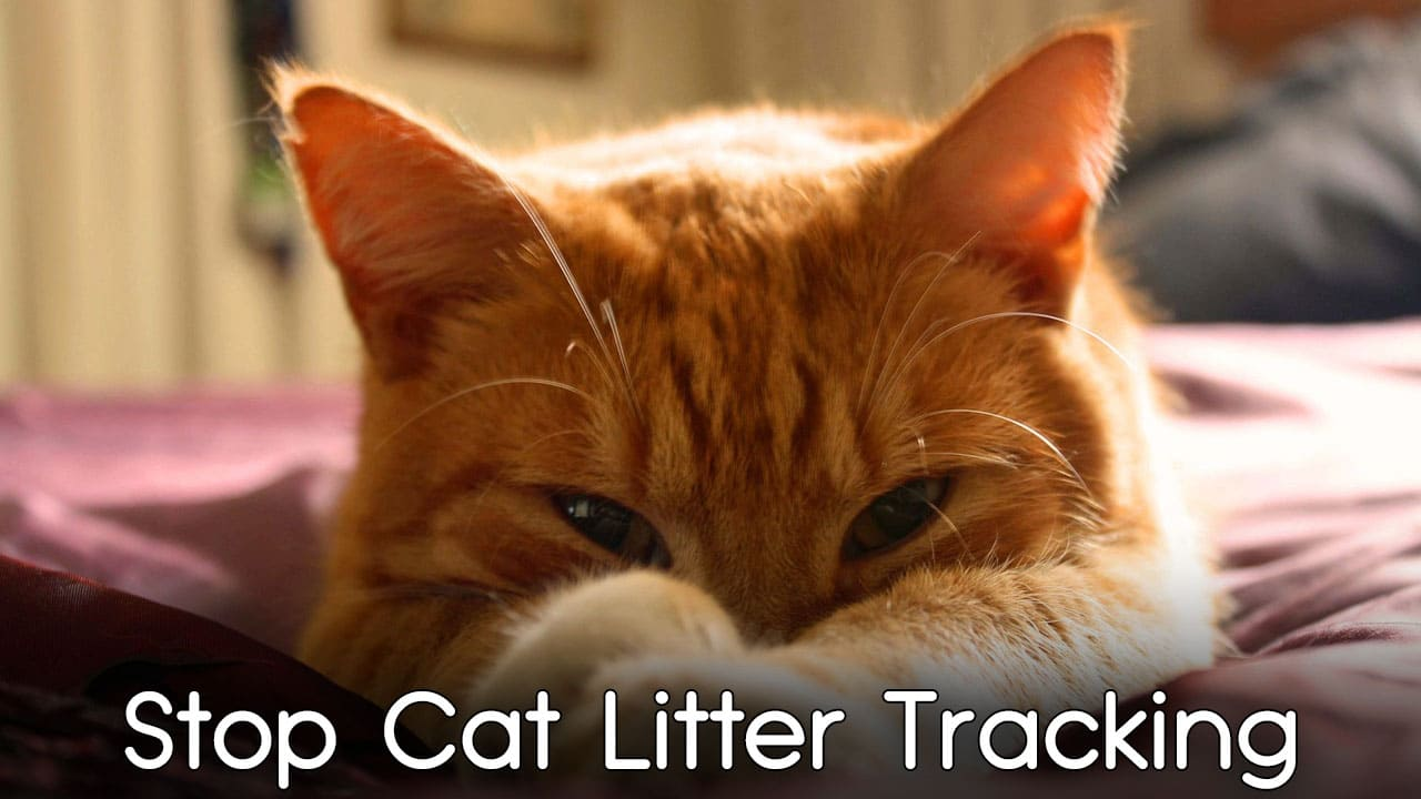 Best Practical Ways to Stop Cat Litter Tracking 1