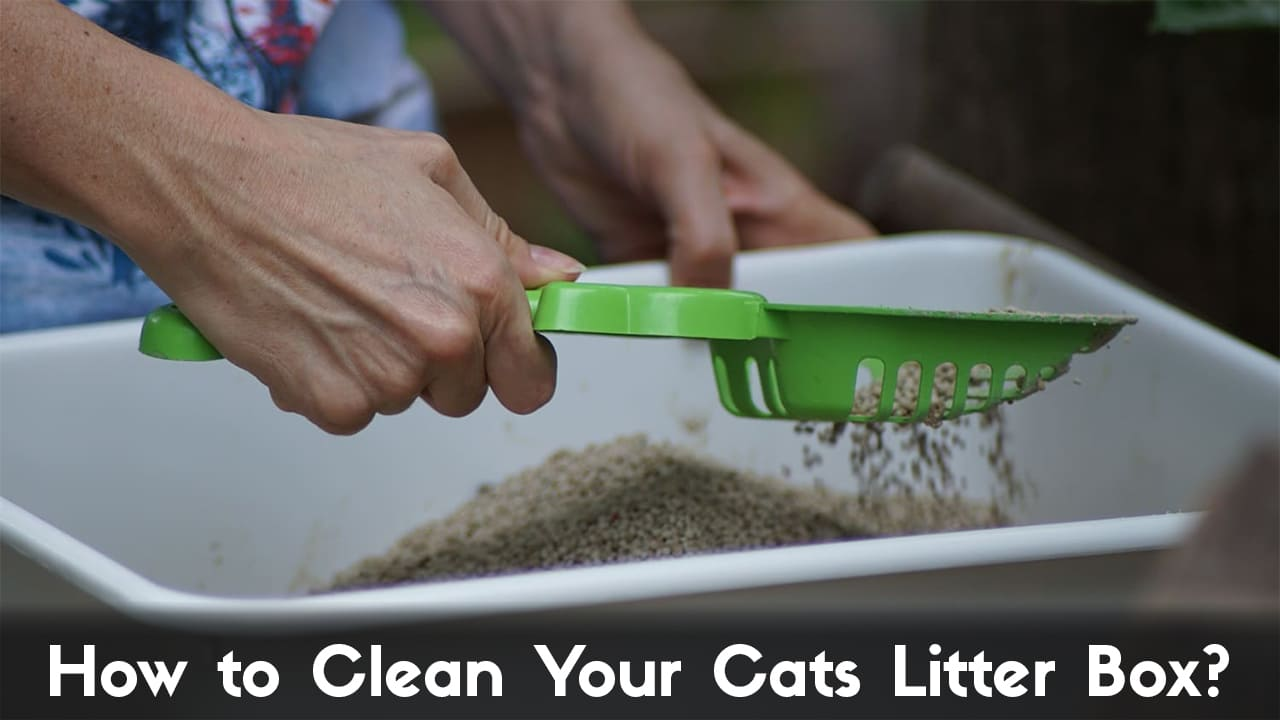 How to Clean Your Cats Litter Box & How Often Should You Clean It? 5