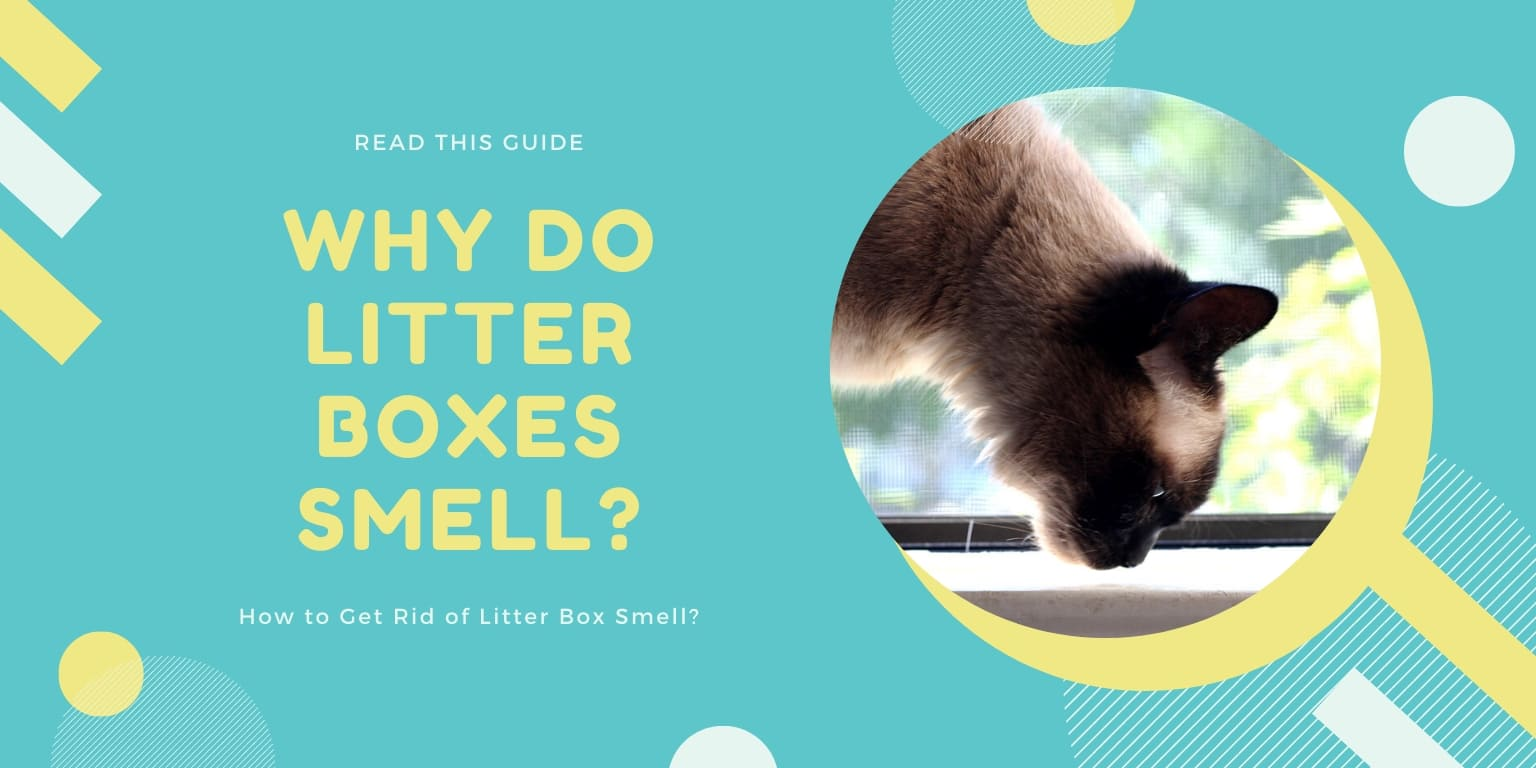 Why Do Litter Boxes Smell & How to Get Rid of Litter Box Smell [Guide] 3