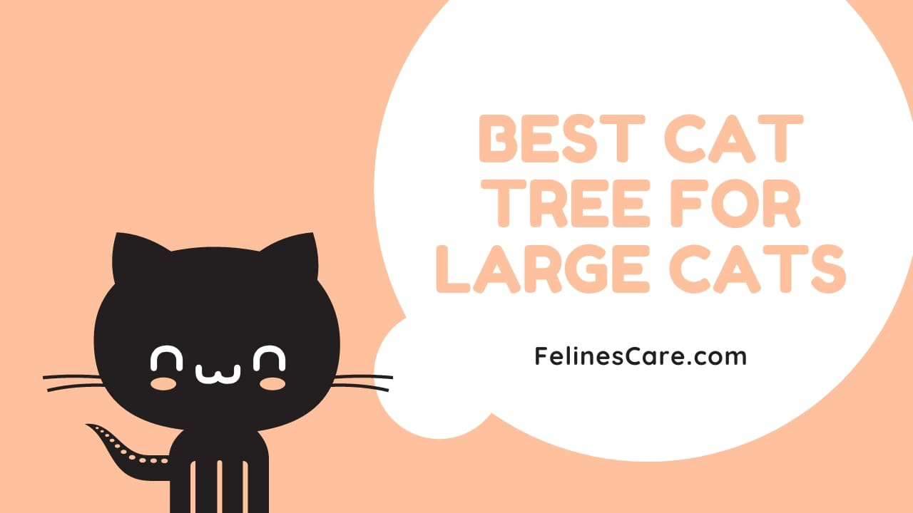 Top 10 Best Cat Tree For Large Cats [Updated November 2020] 43