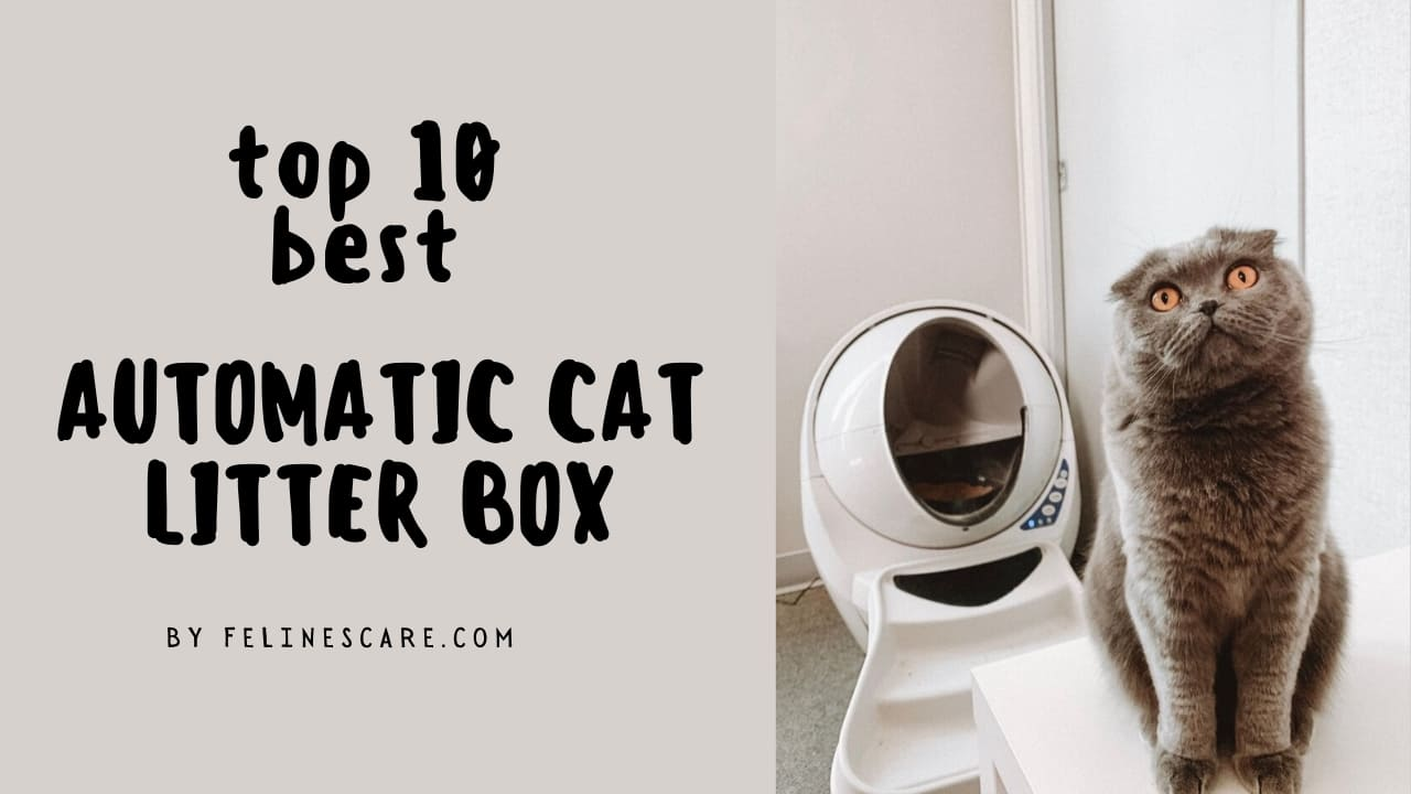 Top 10 Best Automatic Litter Box For Large Cats [Updated November 2020] 40