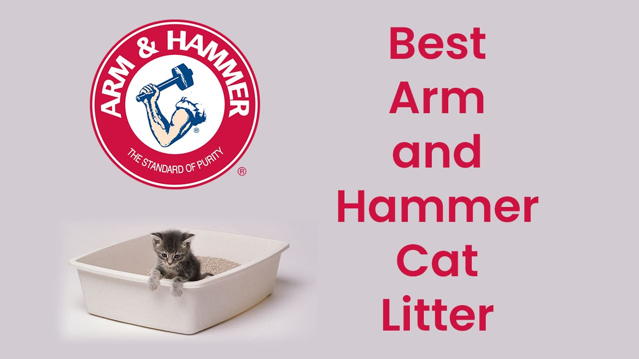 Top 8 Best Arm and Hammer Cat Litter [Updated November 2020] 23