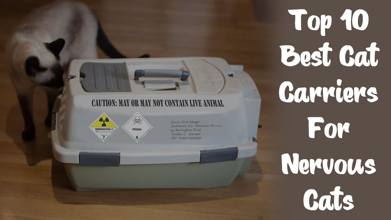Top 10 Best Cat Carriers For Nervous Cats [Updated November 2020] 2