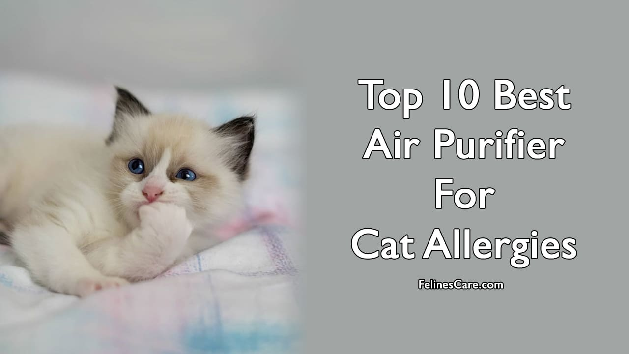 Top 10 Best Air Purifier For Cat Allergies [Updated November 2020] 1