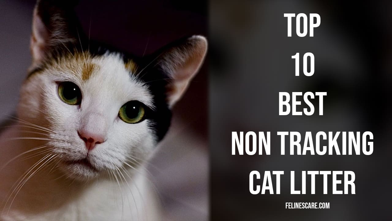 Top 10 Best Non Tracking Cat Litter [Updated November 2020] 38