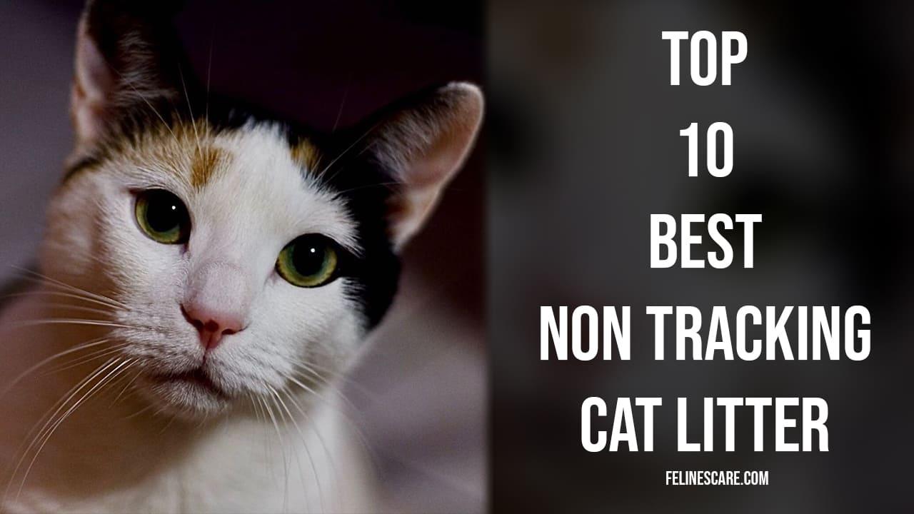 Top 10 Best Non Tracking Cat Litter [Updated December 2020]