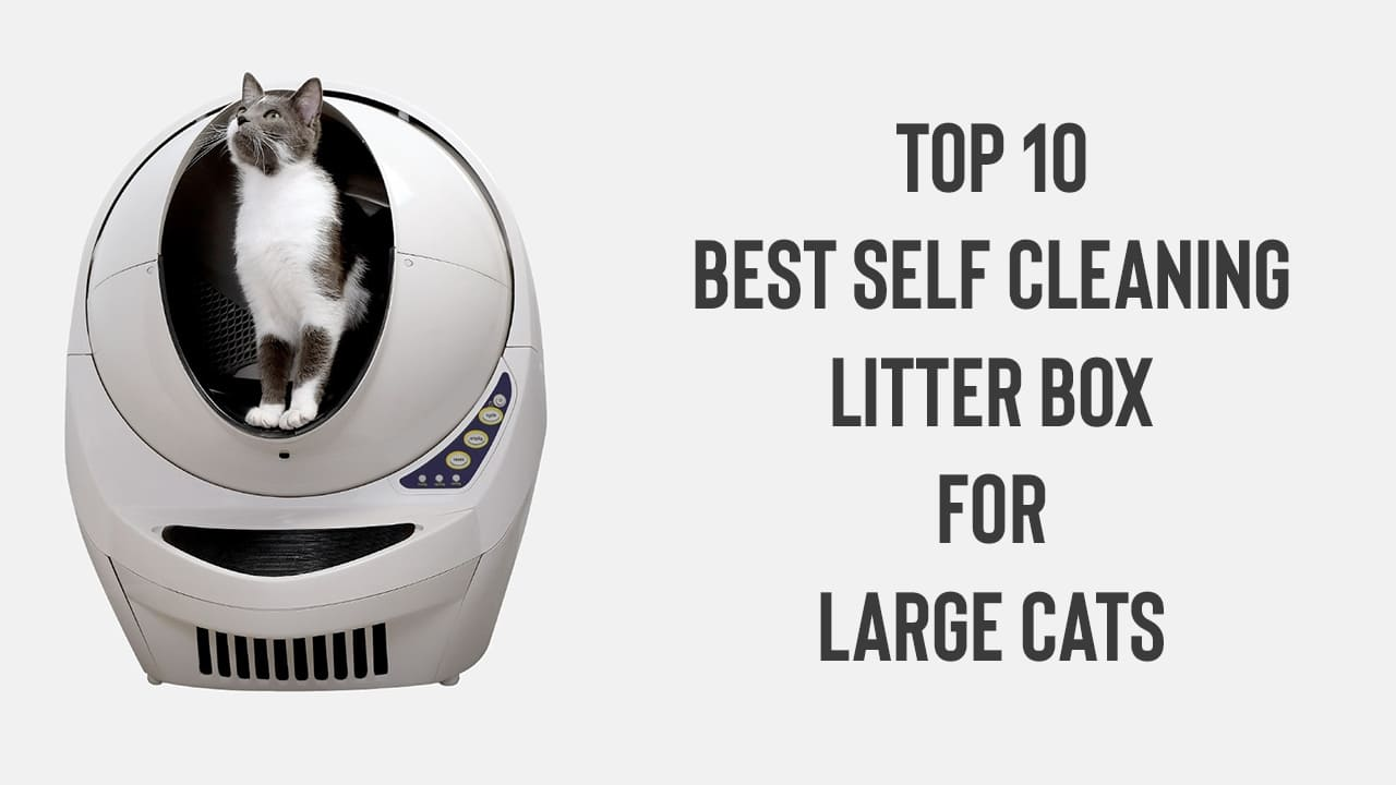 Top 10 Best Self Cleaning Litter Box For Large Cats [Updated November 2020] 1