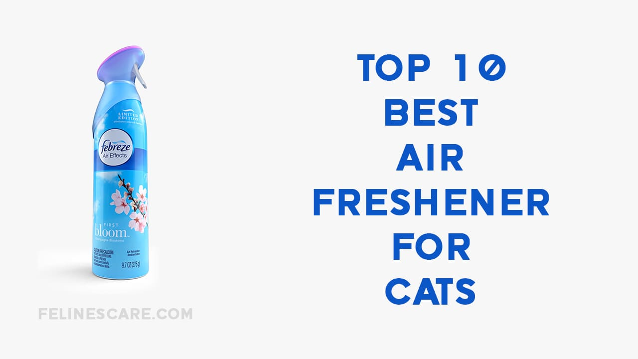 Top 10 Best Air Freshener for Cats