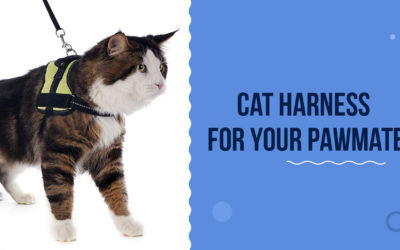 Pawsome Cat Harness For Your Feline Buddy To Flaunt In 2021!