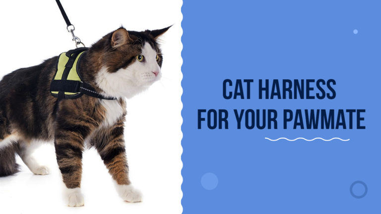 Best Cat Harness For Your Feline Buddy To Flaunt In 2021