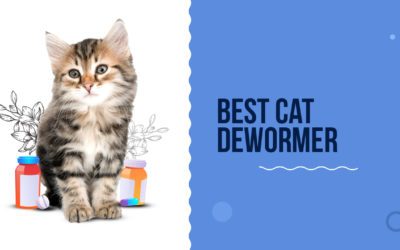 Best Cat Dewormer To Buy In 2021