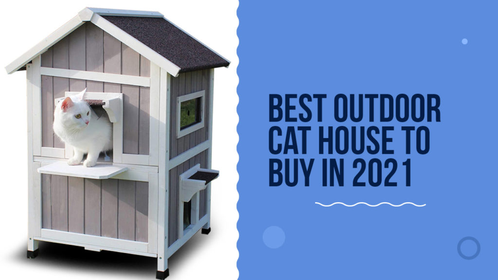Best outdoor cat house to buy in 2021