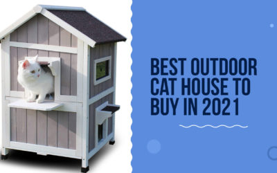 10 Best Outdoor Cat House To Buy In 2021